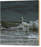 A Beautiful Snowy White Egret On Hilton Head Island Beach Wood Print