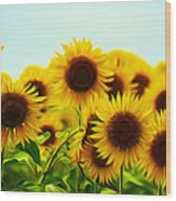 A Beautiful Sunflower Field Wood Print