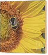 A Bee Gathering Pollen On A Sun Flower Wood Print