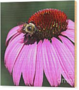A Bee On The Highline Wood Print