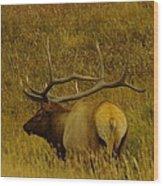 A Big Bull Elk Wood Print