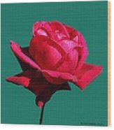 A Big Red Rose Wood Print