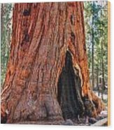 A Big Tree Wood Print