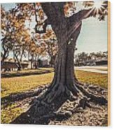 A Big  Tree Trunk Of Long Beach In The Autumn Wood Print
