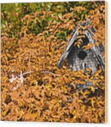 A Bird House Sits Empty In Fall Wood Print
