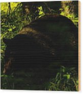 A Black Bear Wood Print