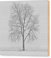 A Blizzard Moment Wood Print by Nancy Edwards