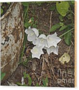 A Bloom In Time Wood Print