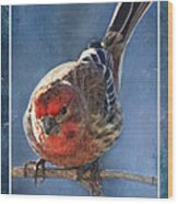 A Blue Morning Housefinch Wood Print