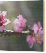 A Bough Of Blurred Peach Blossom Wood Print