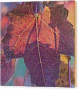 A Breath Of Autumn Wood Print by Dana Moyer