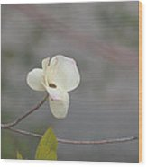 a breath of Dogwood Wood Print by Christine Burdine