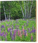A Breathless Moment Among Lupine Wood Print