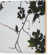 A Brown Thrasher Sings In Sycamore Tree Wood Print