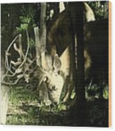 A Buck Deer Grazes Wood Print