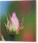 A Budding Rose Wood Print