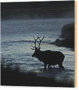 A Bull Elk Crosses The Madison In The Early Morning  Wood Print