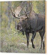 A Bull Moose Named Gaston Wood Print