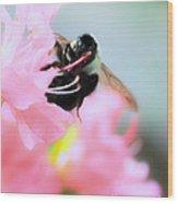 Bumble Bee And Azalea Wood Print
