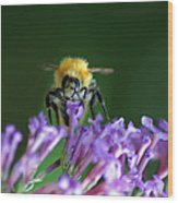 A Bumblebee On Lilac Wood Print