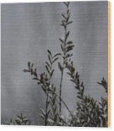 A Bush In Snow Wood Print