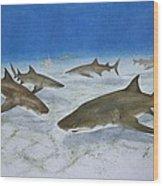 A Bushel Of Lemon Sharks Wood Print