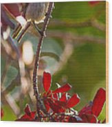 A Bushtit Bird Wood Print