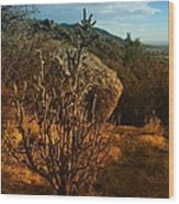 A Cactus In The Sandia Mountains Wood Print