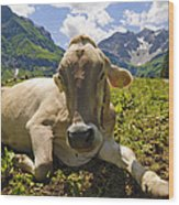 A Calf In The Mountains Wood Print