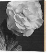 A Camellia Flower Wood Print