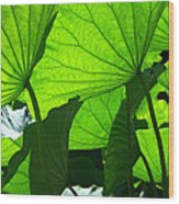 A Canopy Of Lotus Leaves Wood Print