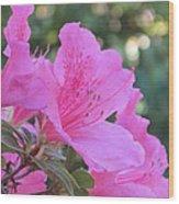 A Cape Town Flower I Wood Print
