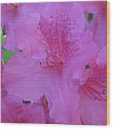 A Cape Town Flower II Wood Print