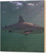 A Carribbean Reef Shark Swims Wood Print