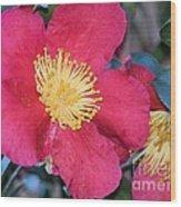 A Christmas Blossom Wood Print