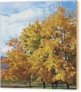 A Chromatic Fall Day Wood Print