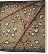 A Close Up Of A Wet Leaf Wood Print