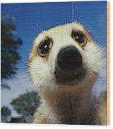 A Close View Of A Meerkats Face Wood Print