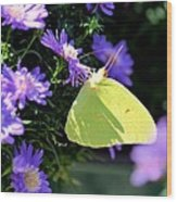 A Clouded Sulphur On Lavender Mums Wood Print