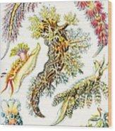 A Collection Of Nudibranchia Wood Print