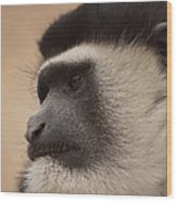 A Colobus Monkey Wood Print