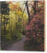 A Colorful Path  Wood Print