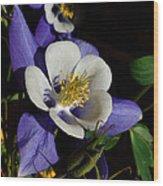 A Columbine Wood Print