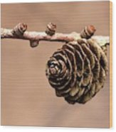 A Conifer Cone On A Tree Branch Wood Print