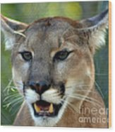A Cougars Face Wood Print
