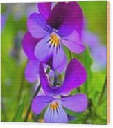 A Couple Of Pansies Wood Print