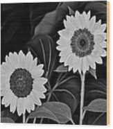 A Couple Of Sunflowers. Wood Print