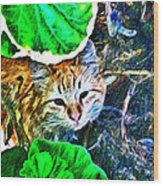 A Curious Cat Wood Print