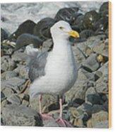 A Curious Seagull Wood Print