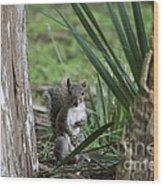 A Curious Squirrel Wood Print